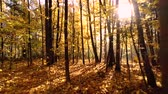 ноябрь : Colorful autumn forest wood