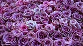церемониальный : Natural roses background closeup Стоковые видеозаписи