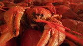 krab : Boiled crayfish close-up