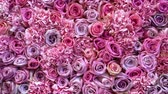 Natural roses background closeup Stock Footage