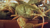 lagostim : Live crayfish on a wooden table close-up