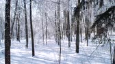 cam : Flying between the trees in snowy forest winter.