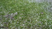 sigorta : Large hail falls on the green grass. Stok Video