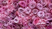 sweetheart : Natural roses background closeup Stock Footage