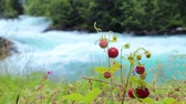 продукты питания : Berry of ripe strawberries close up. Nature of Norway