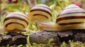 продукты питания : Snail slowly creeping along super macro close-up