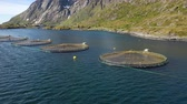 продукты питания : Aerial footage Farm salmon fishing in Norway. Norway is the biggest producer of farmed salmon in the world, with more than one million tonnes produced each year. Стоковые видеозаписи