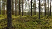 toboztermő fa : Aerial View of the Forest in Finland. Beautiful nature of Finland. Stock mozgókép