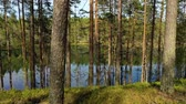 jezera : Aerial View of the Lake and Forest in Finland. Beautiful nature of Finland.
