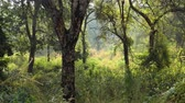 ベンガル : Jungle India. Ranthambore National Park Rajasthan India. Beautiful nature of India 動画素材