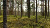 recurso : Aerial View of the Forest in Finland. Beautiful nature of Finland. Stock Footage