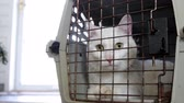 rez : Cat Relaxes in old rusty cage