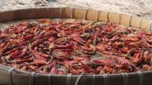 mediterranean mussel : Panning across a tray of chili peppers drying in the sun Stock Footage