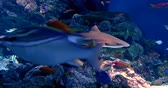 footage tropical reef fish, shark and aquatic plants in aquarium