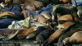 причал : Sea lions sunning themselves on an overcrowded pier