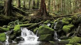 severozápad : The Sol Duc river falling over moss covered rocks, Washington,  National Park Dostupné videozáznamy