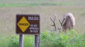 предупреждение : Redwoods National Park, Adult male Elk grazing in a field next to a warning sign