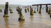 причал : Remains of an old Pier, Coos Bay, Oregon