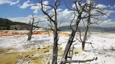 halál : Dead trees in Canary Springs, Yellowstone National Park, dolly shot