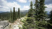 borovice : View from Mount Revelstoke National Park of the Canadian Rockies, dolly shot