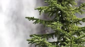 borovice : Yoho National Park, Pine Tree and Takakkaw Falls, British Columbia, Canada, with high quality audio included