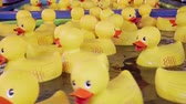 brinquedos : Yellow rubber ducks, carnival game, close-up