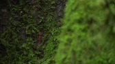 vegetação : Close up on tree with moss
