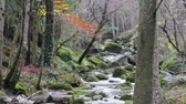 autumn : Winding Creek Cascades Under the Rain in Fall.  Mediterranean River Cascades in Autumn Beautiful and awesome winding creek. Mighty and meandering stream under the rain in Fall. Natural landscape of the Garrotxa, Girona.