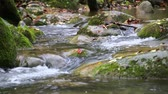 autumn : Creek Cascade with Fallen Red Leaves in Fall.  Fresh Mediterranean river cascades in Autumn rack focus. Beautiful and awesome winding creek. Mighty and meandering stream under the rain in Fall. Natural landscape of the Garrotxa, Girona. Stock Footage