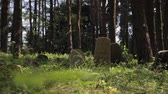 gedenken : Panning shot of abandoned islamic graveyard in the forest. Grass and trees grows over grave monuments in the woods