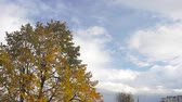 Autumn tree with yellow leaves against clouds moving on blue sky time lapse.