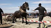 gipsy : Sofia, Bulgaria - 3 March, 2017: Horses and their owners participate in a heavy pull tournament. The animals has to pull a load of hundreds of kilograms on a 30 m. track.