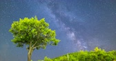 perseids : Time lapse of a Meteor Shower and the Milky Way. Green plum tree with plums in the mountain as a foreground. Night sky nature summer timelapse. Perseid Meteor Shower observation. Tilt up 4k video.