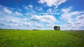 litwa : Beautiful summer landscape of meadows with trees. Lithuania Wideo