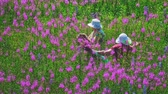 coletar : Women collect willow tea at a summer meadow