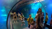 reef shark : Wroclaw, Poland - July 31, 2018: People attend underwater tunnel in oceanarium in city zoo
