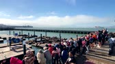 Лев : San Francisco, USA - September 10, 2018: Tourists watching sea lions on the famous touristic place Pier 39 Стоковые видеозаписи