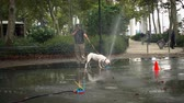 śmieszne : New York, USA - September 6, 2018: Dog is playing with water in a park Wideo