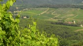 тосканский : Summer season, green leaves of vineyards in Chianti region, Tuscany. Italy. Стоковые видеозаписи