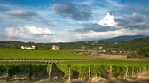 cultivating : Rows of green vineyards in the Chianti region on sunny day. Summer season, Tuscany. Timelapse. Stock Footage