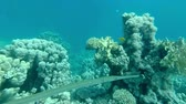 aquarium : Underwater coral reef  landscape with colourful fish Stock Footage