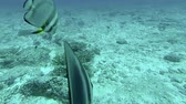 dahab : Coral reef and tropical fish at Seychelles, Indian Ocean