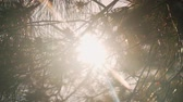 dia soleado : In the frame with a plan, fir branches, through which sunlight penetrates, leaving a glare.