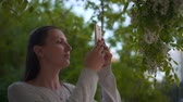 акация : A young woman photographs a flowering white acacia on the phone in a park. Woman and blooming white trees in the park.
