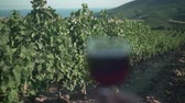 мерло : A woman holds a glass of red wine at sunset against the background of a vineyard and mountains. Wine tasting concept. Стоковые видеозаписи