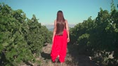 виноградник : A young girl in a red dress is walking through the vineyard. A free girl with long hair walks backwards in the frame through the vineyard, the camera follows her.