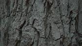 weathered : Texture of tree bark. Texture of brown tree bark. Tree trunk with rough bark.