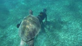 mergulhador : Slow motion shot of a big turtle is swimming near the sea bottom. Diver with camera in his hands is swimming underneath and shooting it. Stock Footage