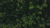 lawn : Aerial shot of green forest and plain. Summer nature scene in Russia Stock Footage
