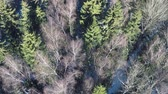 rosja : Aerial winter shot of conifers and bare birch trees in mixed forest